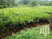 Residential / Farming Land for Sale | Land & Plots For Sale for sale in Kisii, Boochi/Tendere