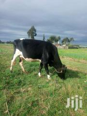 Frisian Dairy Cow | Livestock & Poultry for sale in Nyandarua, Magumu