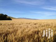 1300 Acres For Sale In Timau | Land & Plots For Sale for sale in Meru, Timau