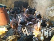Guineafawls | Livestock & Poultry for sale in Nairobi, Embakasi