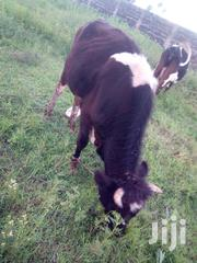 Fresian Bull | Livestock & Poultry for sale in Nakuru, Nakuru East