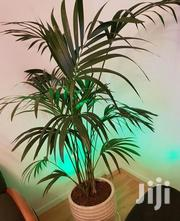 Indoor Plants | Garden for sale in Nairobi, Kitisuru