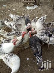 Turkeys For Sale | Livestock & Poultry for sale in Nairobi, Kasarani