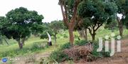 Land For Sale | Land & Plots For Sale for sale in Kwale, Tsimba Golini