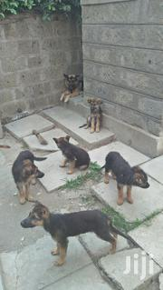 Germany Shepherd Puppy For Sale | Dogs & Puppies for sale in Kajiado, Kitengela