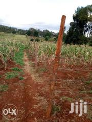50x100 Plots For Sale In Kerwa Area In Kikuyu 3km From Nairobi Highway | Land & Plots For Sale for sale in Kiambu, Sigona
