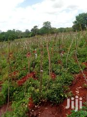 Sale Of 2aces And10acres Riverfrontage   Land & Plots For Sale for sale in Embu, Mavuria