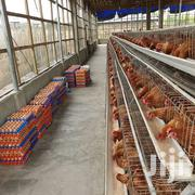 Poultry Battery Cages 192 Birds | Pet's Accessories for sale in Nairobi, Imara Daima