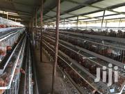 Chicken Cages In Nairobi Town | Farm Machinery & Equipment for sale in Nairobi, Utalii