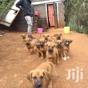Dog Training School, Consultant | Pet's Accessories for sale in Nairobi, Karura