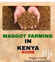 Black Soldier Fly Bsf Maggots Farming For Livestock Proteins | Livestock & Poultry for sale in Nairobi, Ruai