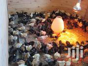 Sex Assorted (Male) Kuroiler Ug Jogoo Chicks | Livestock & Poultry for sale in Nairobi, Nairobi Central