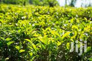 Tea Zone Land (2.3 Acres) | Land & Plots For Sale for sale in Nyeri, Wamagana
