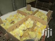 Day Old Jogoo Chicks (Cockerels) | Livestock & Poultry for sale in Nairobi, Nairobi Central