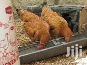 Kenbro Chicks (Kenchic LTD) | Livestock & Poultry for sale in Nairobi, Nairobi Central