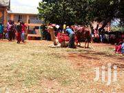 Horse/Camels For Hire | Party, Catering & Event Services for sale in Nairobi, Nairobi Central