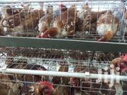 Kenchic Layers(3-4 Months) | Livestock & Poultry for sale in Nakuru, Rhoda