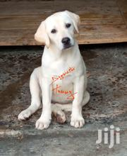 Female Labrador Puppy | Dogs & Puppies for sale in Nakuru, Bahati