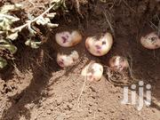 Shangi Potatoes For Seed. | Feeds, Supplements & Seeds for sale in Nairobi, Kangemi