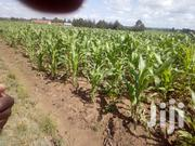 1/4 Plot on Sales   Land & Plots For Sale for sale in Laikipia, Igwamiti