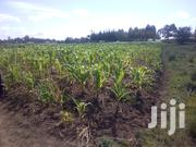 2 Plots on Sales   Land & Plots For Sale for sale in Laikipia, Igwamiti