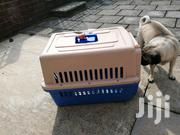 Airline Approved Travelling Crates/Carriers | Pet's Accessories for sale in Nairobi, Nairobi Central