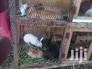 Rabbits Available For Sale | Livestock & Poultry for sale in Mombasa, Tononoka