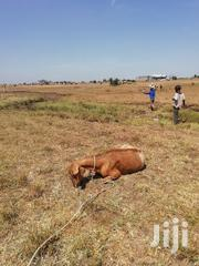 Juja Plot 50x100 at Bypass for Sale | Land & Plots For Sale for sale in Kiambu, Juja