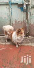 Dog for Breed | Dogs & Puppies for sale in Umoja II, Nairobi, Nigeria