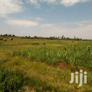 Nyamonye 200 Acres Land for Sale | Land & Plots For Sale for sale in Siaya, Yimbo West