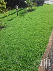 Arabica Grass | Garden for sale in Nairobi, Karen