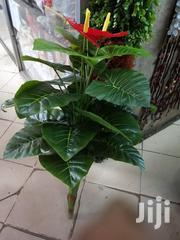 Artificial Potted Plants | Garden for sale in Nairobi, Nairobi Central