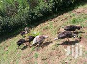 Turkey For Sale | Livestock & Poultry for sale in Kakamega, East Kabras