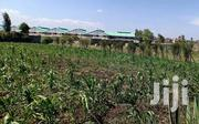 A Prime Land 1.25 Acres For Sale In Kamakis, Eestern By Pass At 55M | Land & Plots For Sale for sale in Kiambu, Kiuu