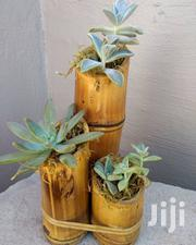 Potted Table Plants | Home Accessories for sale in Nairobi, Kileleshwa