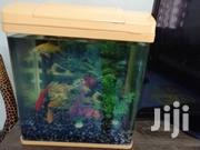 Aquarium With 2 Fishes | Fish for sale in Nairobi, Ngara