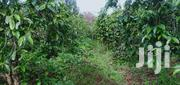 1 Acre for Sale in Nyeri | Land & Plots For Sale for sale in Nyeri, Magutu