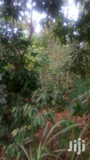 1/4 Acre Land With Mature Coffee And Mature Gravellia Tress | Land & Plots For Sale for sale in Tharaka-Nithi, Magumoni