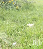 Land for Sale Karen Marula Lane | Land & Plots For Sale for sale in Nairobi, Karen