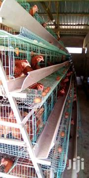 Poultry Chicken Cages | Livestock & Poultry for sale in Nairobi, Kasarani