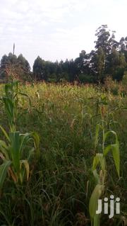 Fertile Farming/Residential Land for Sale | Land & Plots For Sale for sale in Kisii, Boochi/Tendere