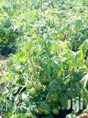 1 And 1/2 Acres On Quick Sale | Land & Plots For Sale for sale in Kirinyaga, Kariti