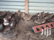 Quail Eggs | Birds for sale in Nairobi, Ruai