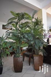 2 Palm Trees | Home Accessories for sale in Nakuru, Mai Mahiu
