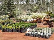 Unique Flowers, Pots And Landscaping | Landscaping & Gardening Services for sale in Nairobi, Ruai