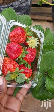 Strawberries Seedlings | Feeds, Supplements & Seeds for sale in Nairobi, Nairobi Central