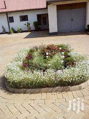 Excellent Landscaping And Gardening | Landscaping & Gardening Services for sale in Nairobi, Karen