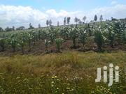 12 Acres Agricultural Land in Nyeri County | Land & Plots For Sale for sale in Nyeri, Gatarakwa