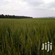 20 Acres Land for Sale at Kisima, Timau | Land & Plots For Sale for sale in Meru, Kisima