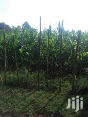 Land 7 Acres In Kachibora 900per Acre | Land & Plots For Sale for sale in Trans-Nzoia, Kaplamai